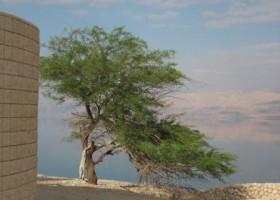 Arabische afwijzing Joodse staat belemmert oplossing conflict