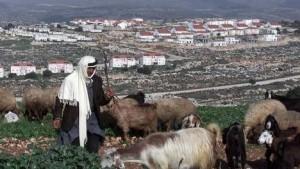 Palestijnse herder voor Joodse nederzetting
