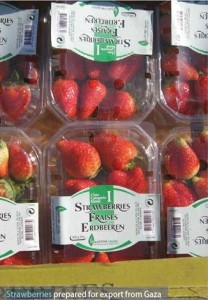 strawberrys-from-Gaza