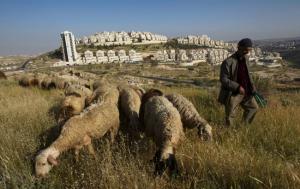 Een Palestijnse schaapsherder met op de achtergrond Har Homa.