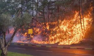 wildfires-israel